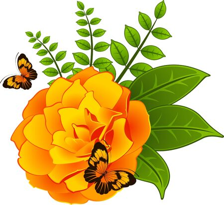 Roses on the white background  with butterfly. photo