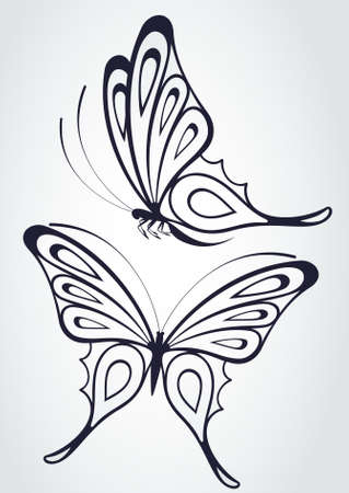 Tropical butterfly on a white background.  photo