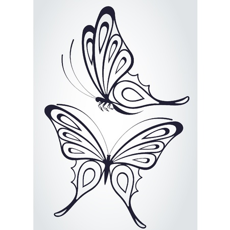 Tropical butterfly on a white background.