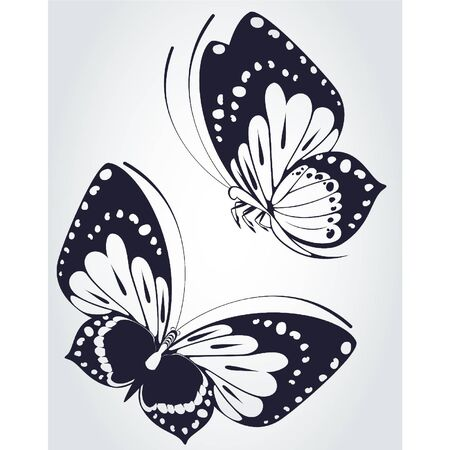 Tropical butterfly on a white background. Vector