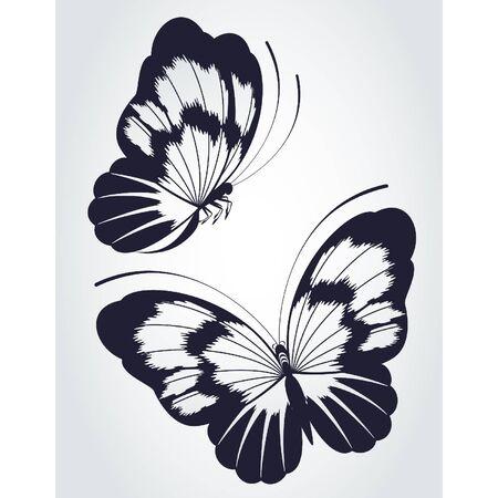 Papillons tropicaux sur un fond blanc.