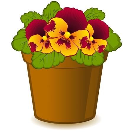Violet in pot on white background. Иллюстрация