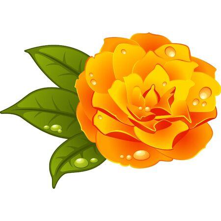 dresser: Rose on the white background
