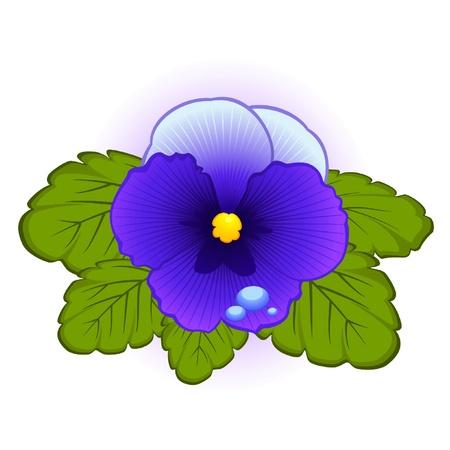Violets on background Vector