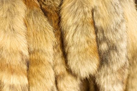 peltry: Closeup of beautiful fur Stock Photo