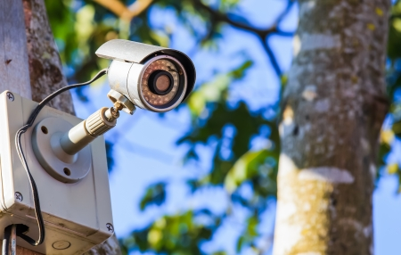 surveillance camera on the tree with blue sky Stock Photo