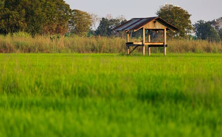 The hut in the paddy rice field in thailand