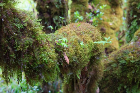 lush moss around the trunk in the jungle