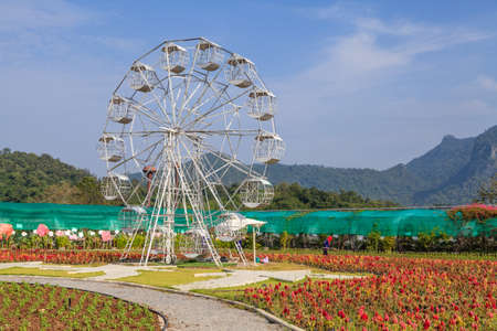 A white ferris wheel with blue sky, plants in the foreground