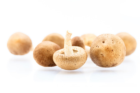 Whole raw Shitake Mushrooms isolated on white