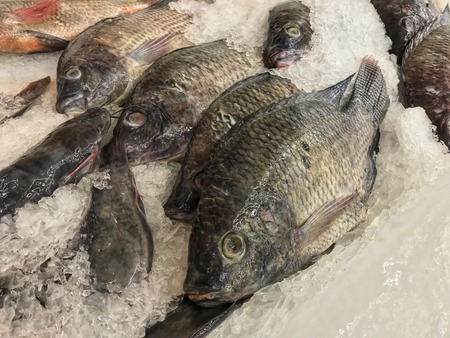 Frozen tilapia fish in market