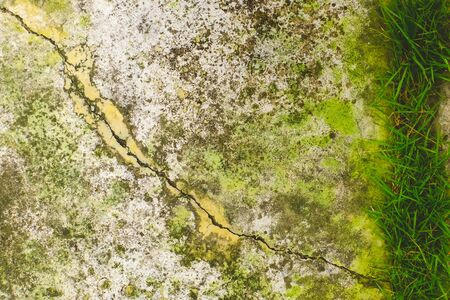 Close-up of Moss on White cement crack wall and peeled paint caused by water and sunlight. Peel wall of White house paint with black stain. Texture background.