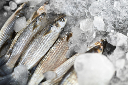 Fish, Food Background. Close Up Of Fresh Caught Grey Mullet Fish Mugil Cephalus With Crushed Ice At Fish Market In Thailand, Asia. Seafood. Healthy Eating Concept. Nutrition, Diet And Vitamins. Stock Photo