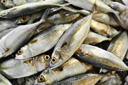 vitamin d: Fish. Food Background. Close Up Of Fresh Caught Mackerel Fish With Crashed Ice At Fish Market In Thailand, Asia. Seafood. Healthy Eating Concept. Nutrition, Diet And Vitamins. Stock Photo