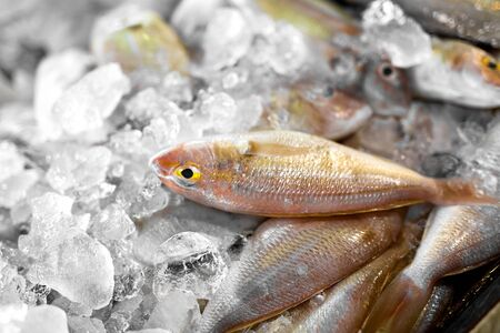 vitamin d: Fresh Raw Food. Close Up Of Variety Of Fresh Caught Fish On Crashed Ice At Fish Market In Thailand, Asia. Seafood. Healthy Eating. Nutrition, Diet And Vitamins. Food Background.