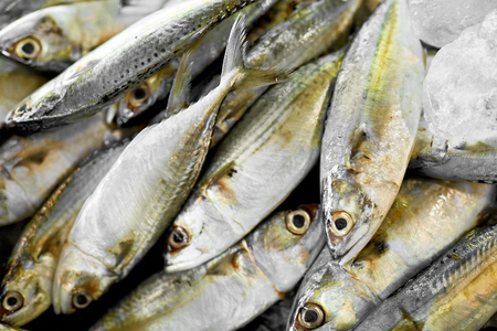 d: Fish. Food Background. Close Up Of Fresh Caught Mackerel Fish With Crashed Ice At Fish Market In Thailand, Asia. Seafood. Healthy Eating Concept. Nutrition, Diet And Vitamins. Stock Photo