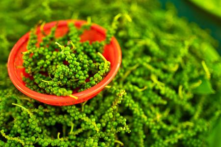 pepe nero: Le verdure. Close Up Di Piccante verde organico pepe nero pianta del pepe in The Farmers Market In Thailandia, Asia. Nutrizione. Cibo sano ingrediente. Spezie.