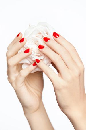 赤い爪。花と赤いマニキュアと女性の手。赤いマニキュアと柔らかい滑らかな肌が白い背景に白いバラを保持して女性の手のクローズアップ。ネイ