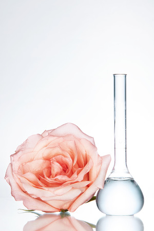 Laboratory Transparent Glassware With Chemical Liquid And Flower Rose On White Background. High Resolution. Stok Fotoğraf