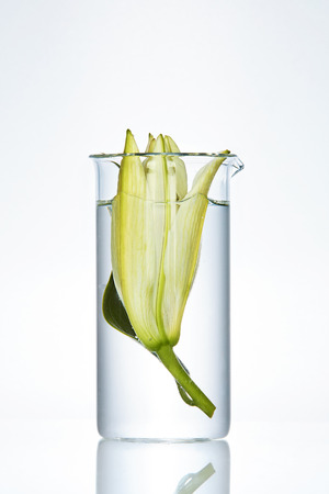 Flower With Liquid In Laboratory Transparent Glass On White Background. High Resolution.