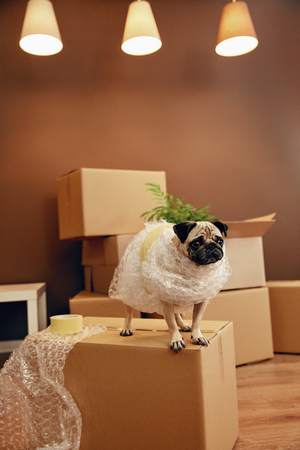 Moving House. Funny Dog On Carton Box In Room. High Resolution.