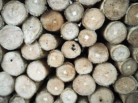 wood cut: wood log background, cut tree trunks Stock Photo