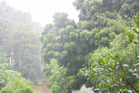 Heavy raining in the asian tropical forest Imagens