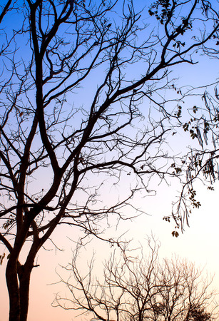 light landscape: Beautiful light landscape, The abstract leaves branch silhouette Stock Photo