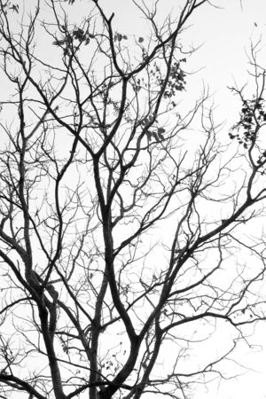 black branch: Abstract symbol idea. The sadness of tree, Leaves branch silhouette with black and white style.