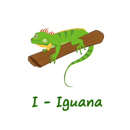Isolated animal alphabet for the kids, I for Iguana