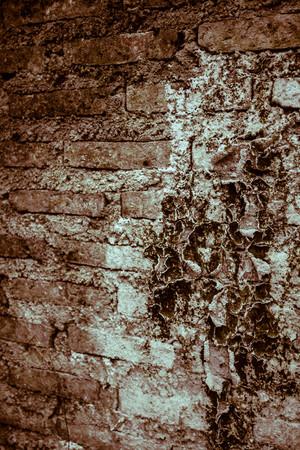 formidable: Formidable wall