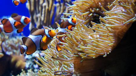 sea anemone: cartoon fish with anemone Stock Photo