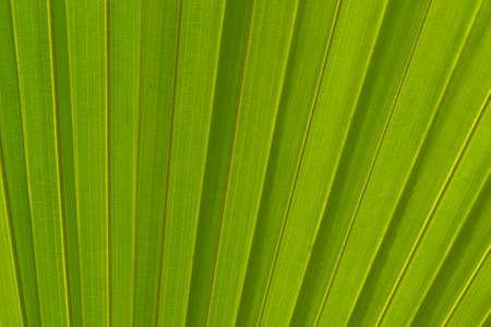 breen: breen leaf background Stock Photo