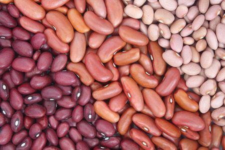 Close-up of three different sort of beans