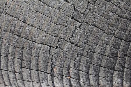 Closeup of grayish withered wood