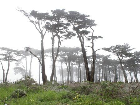 前景に緑の草に霧の中の木 写真素材