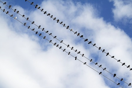 Flock of birds sitting on electric wire with cloudy sky as a background