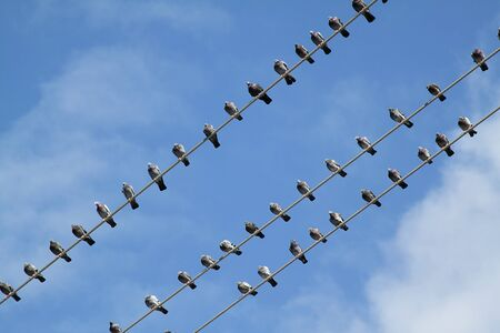 Group of birds on electrical wire with blue sky as a background Stock Photo