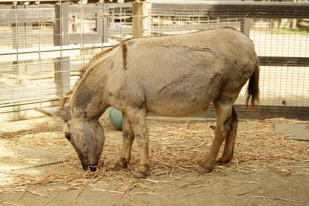 A donkey eating in the cage in the zoo Banco de Imagens