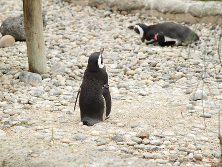動物園でペンギン 写真素材