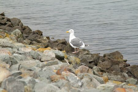 A seagull standing on the rocks near the water Stock Photo