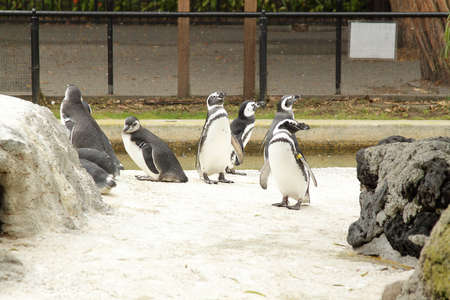 Group of several penguins in the zoo