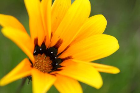 Bright yellow flower over the green background