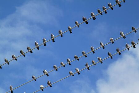 Group of birds on electric wire over blue sky