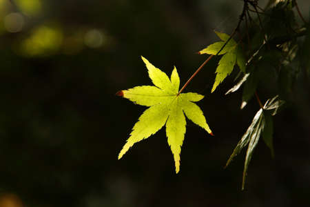 Bright green leaf on a branch over dark background