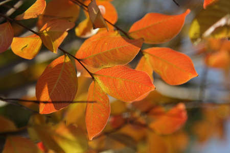 Bright red autumn leaves on a branch of tree