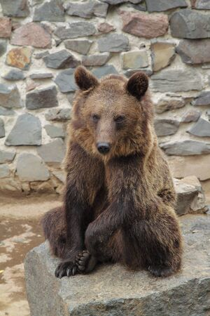 A brown bear on a stone in the zoo
