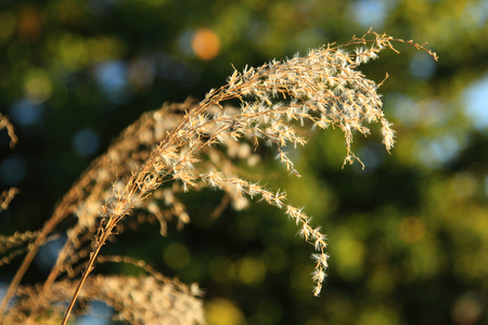 Photo of dry plants ober green background