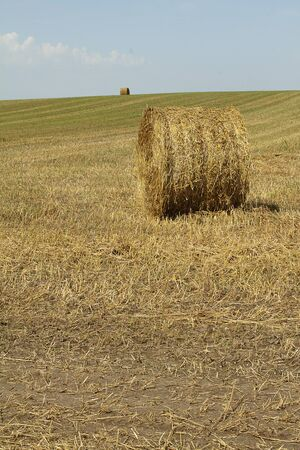 Two haystacks on a field in sunny day