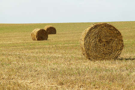A group of haystacks on a field on sunny day